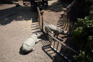 Tiergarten PANZERNASHORN