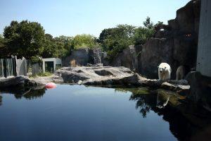 Tiergarten EISBÄR